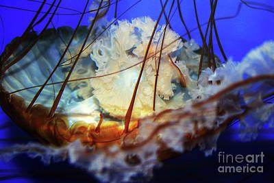 Photograph - Monterey Jellyfish by Eileen Gayle
