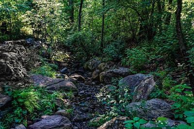 Photograph - North Woods Serenity by M Nuri Shakoor