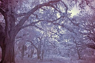 Photograph - Sleepy Hollow's Muse by Roberto Aloi