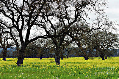 Photograph - Sonoma County Mustard Field by Eileen Gayle