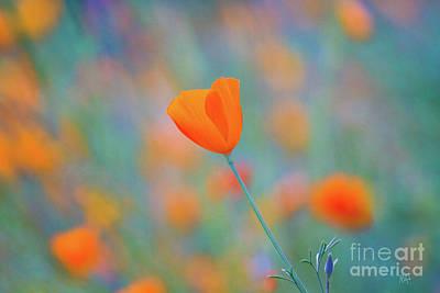 Orange Poppy Art Prints