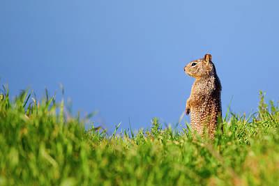 California Ground Squirrel Photographs