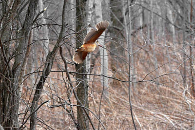 Woodcock Photographs