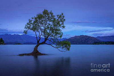 Photograph - The Wanaka Tree 2 by Paul Woodford