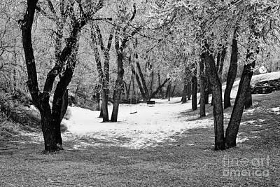 Photograph - Winter Swing by James Jones