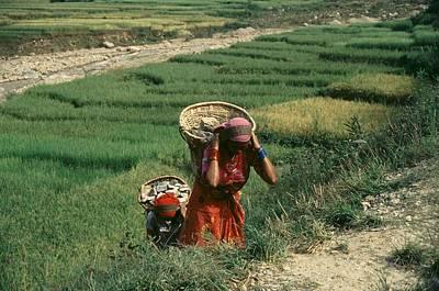 Women In Nepal Paintings