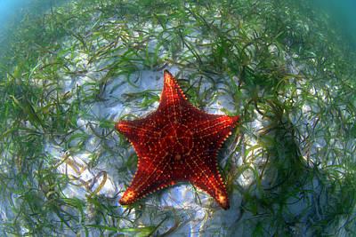 Photograph - Sea Star by Todd Hummel