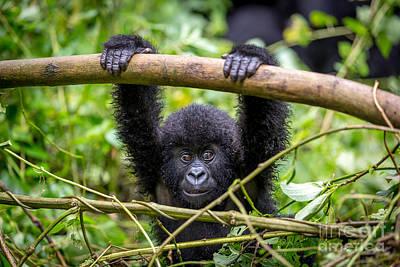 Critically Endangered Species Art