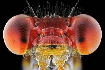 Odonata Photographs