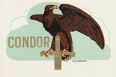 Condor Paintings