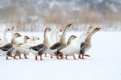 Ornithology Photographs