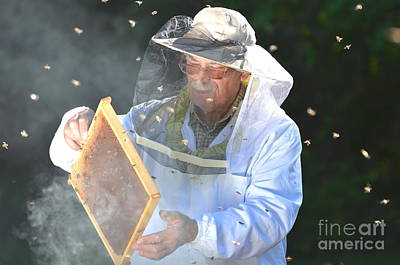 Apiary Photographs