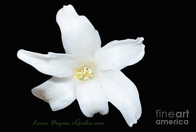 Photograph - Hyacinth #193 by EGiclee Digital Prints