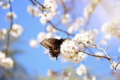 Photograph - I Found Spring by Alicia R Paparo