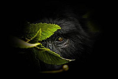 Rwanda Photographs