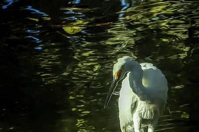 White Ibis Art