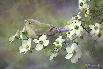 Warbler Paintings