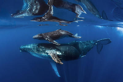 Marine Mammal Photographs