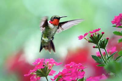 Humming Birds Art Prints