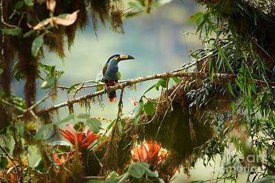 Bird Feeder Photographs