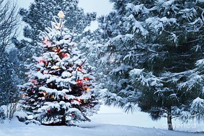 Christmas Lights Photographs