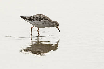 Photograph - Ruff by Wendy Cooper
