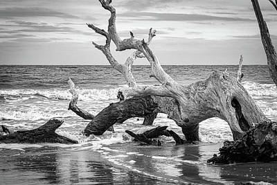 Photograph - Driftwood Beach by Randy Bayne