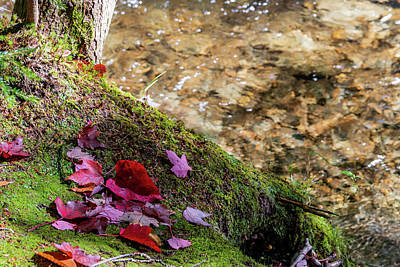 Photograph - Autumn Fallen Leaves Along a Stream - Stowe, Vermont by Chad Dikun