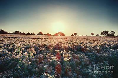 Digital Art - Borage Sunset by Nigel Bangert
