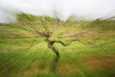 Photograph - Dancing Vine, Nahe by Marion Rockstroh-Kruft
