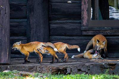 Photograph - Fox Pups by Cameron Knudsen