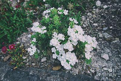 Photograph - Garden White by Davy Cheng