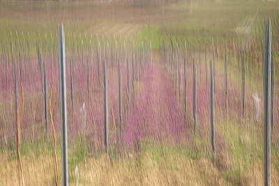 Photograph - Lilac vineyard by Marion Rockstroh-Kruft