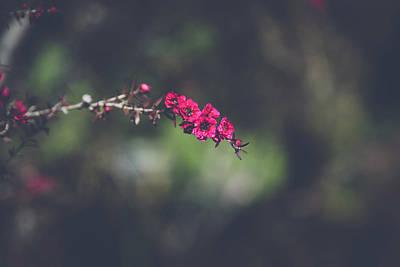 Photograph - Pink Bunches by Saroum Giroux
