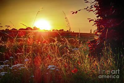 Digital Art - Poppy Sunset by Nigel Bangert