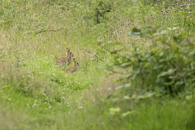 Photograph - Rabbits by Wendy Cooper