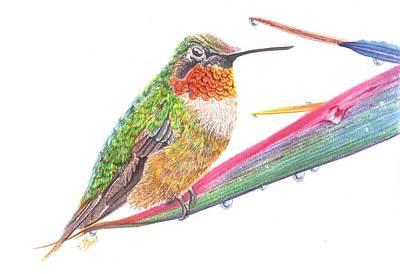 Painting - Ruby Throated Hummingbird by Swati Singh