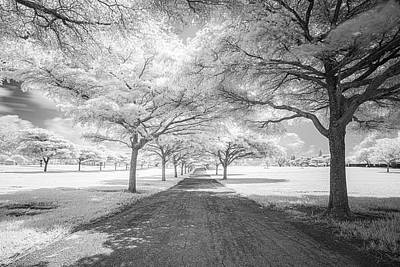 Photograph - The Orchard by Roberto Aloi