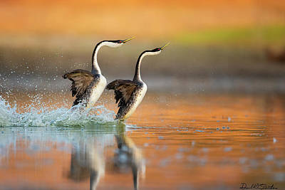 Photograph - The Rush by Donald Quintana