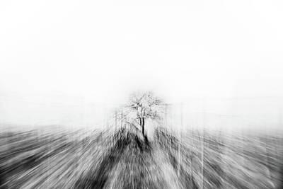 Photograph - Magic Tree in the Vineyard in Rheinhessen by Marion Rockstroh-Kruft