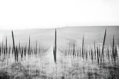 Photograph - Vines in Winter by Marion Rockstroh-Kruft