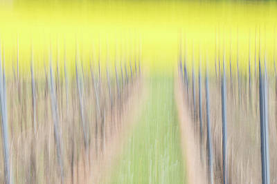 Photograph - Vineyard with Rapeseeds by Marion Rockstroh-Kruft