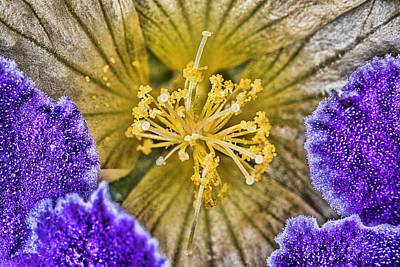 Photograph - Weeds are Flowers Too by Roberto Aloi