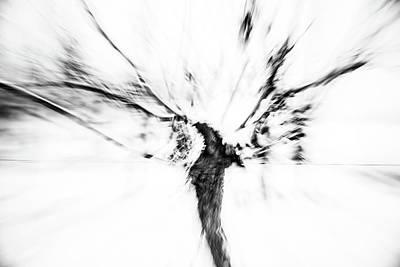 Photograph - Powerful Winter Vine Rheinhessen by Marion Rockstroh-Kruft