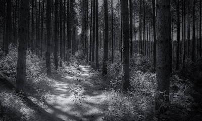 Pine Cone Photographs
