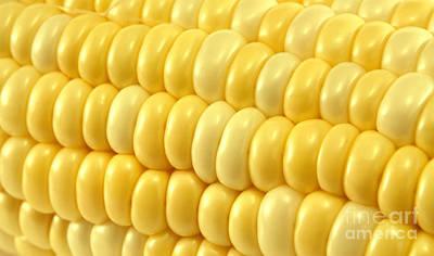 Sweet Corn Photographs