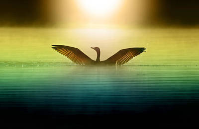 Goose Photographs