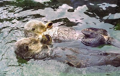 Otter Photographs