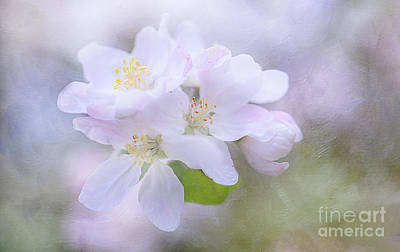Photograph - Spring Heralds by Maria Ismanah Schulze-Vorberg