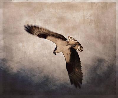 Hawk Photographs